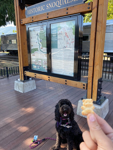 dog with treat in front of snoqualmie sign