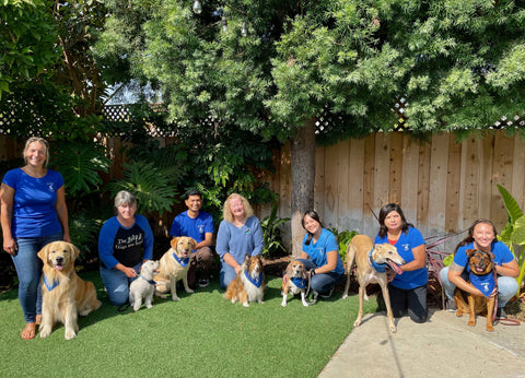 bark therapy volunteers together