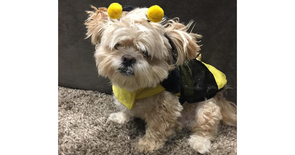 Penny as a bumble bee