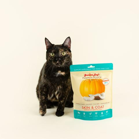 Cat sitting next to skin and coat pumpkin pouch on off white background