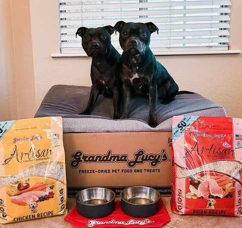 two Pitbulls on a dog bed with dog food