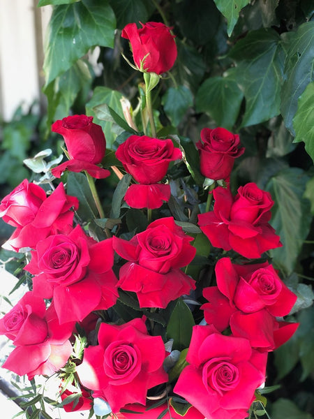 Dozen Premium Red Rose Arrangement