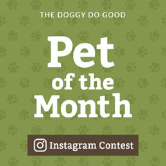 The 'Pet of the Month' Photo Contest