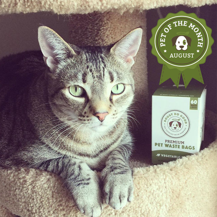 August 'Pet of the Month' Winner - Dan Dan!