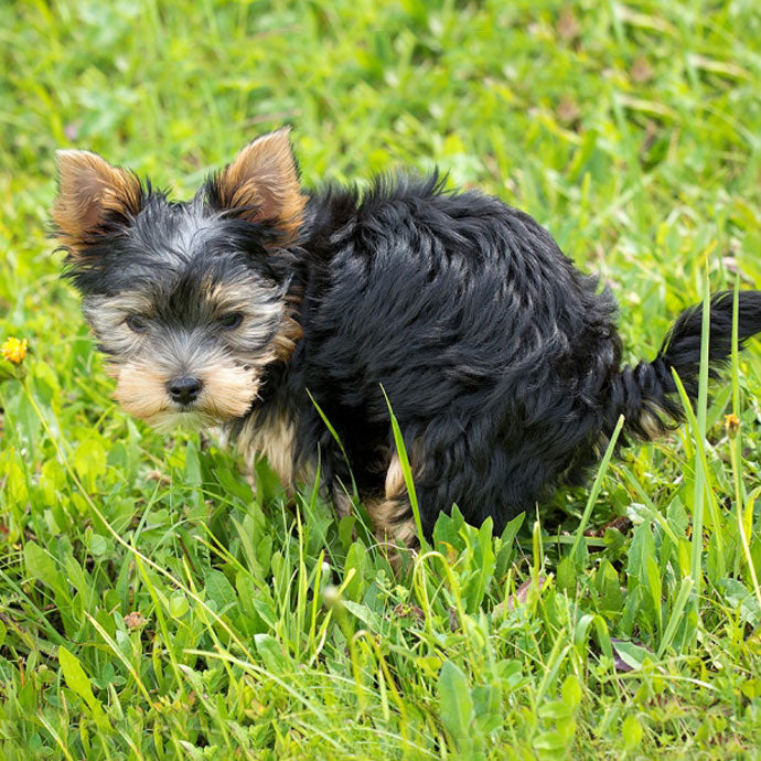 4 Reasons You Need To Pick Up Your Dog's Poop
