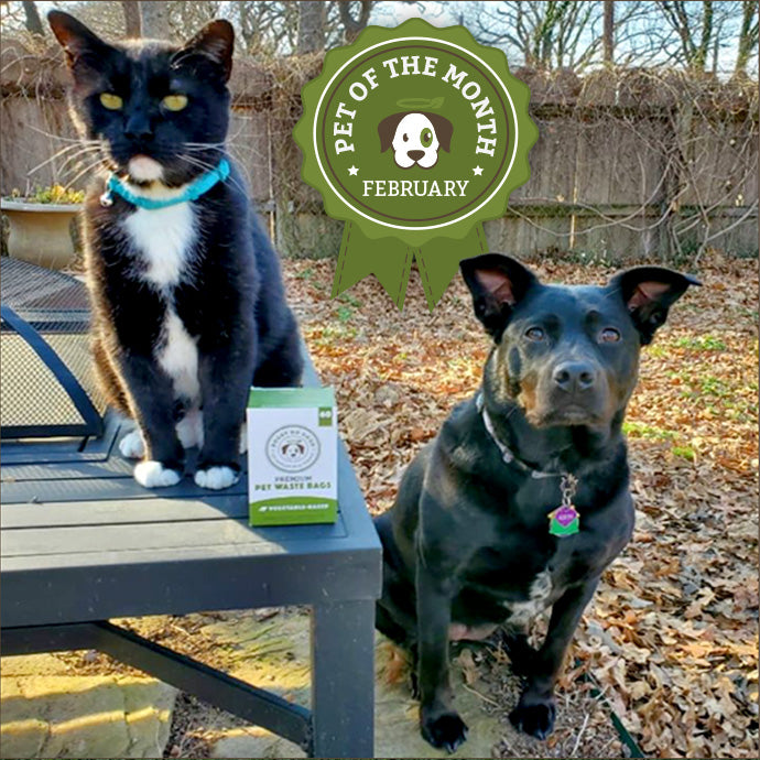 February 'Pet of the Month' Winners Aeryn & Top Cat!