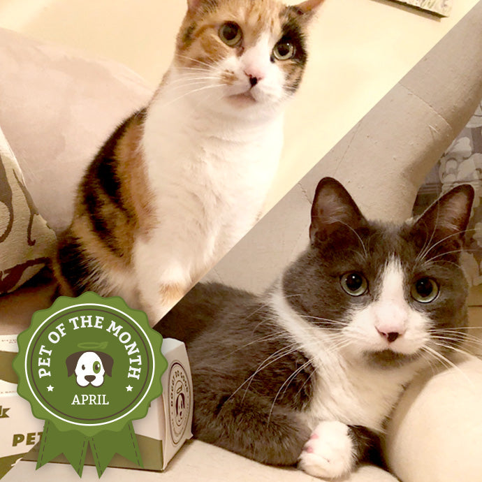 Cammie & Hugo - April 'Pet of the Month' Winners!