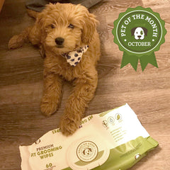 Winnie The Dood - October 'Pet of the Month' Winner!