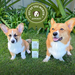 January 'Pet of the Month' Winners Nacho & Frito!