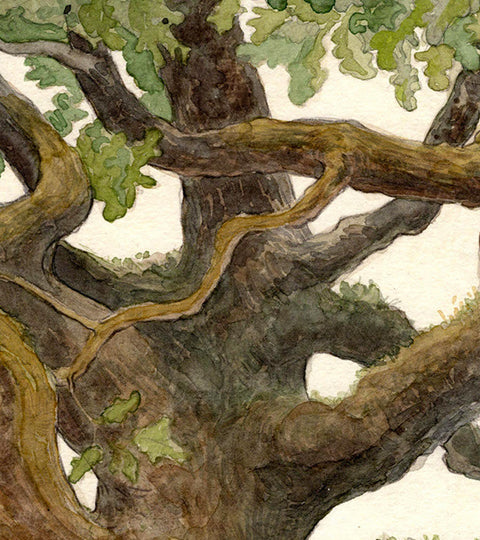 Ralukko :: Trees in Watercolour and Pencils