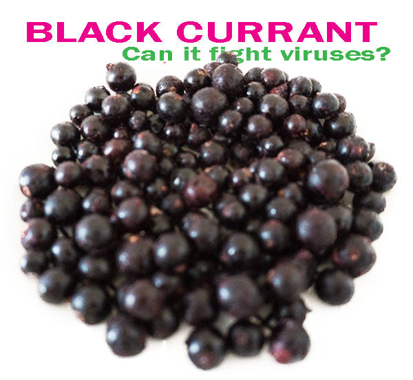 BLACK CURRANT TO FIGHT VIRUSES