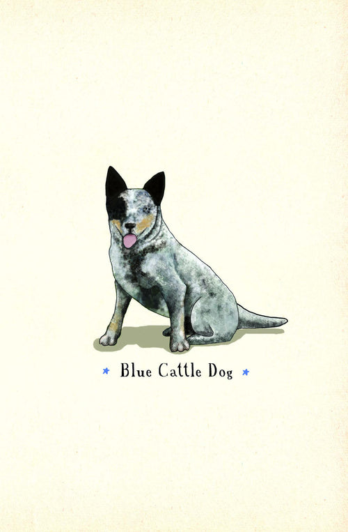 Blue Cattle Dog [Greeting Card]