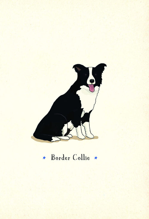 Border Collie [Greeting Card]