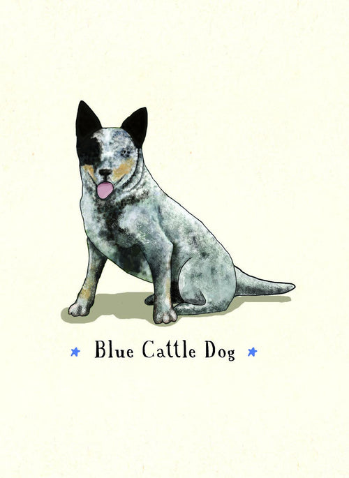 Blue Cattle Dog [GIFT CARD]