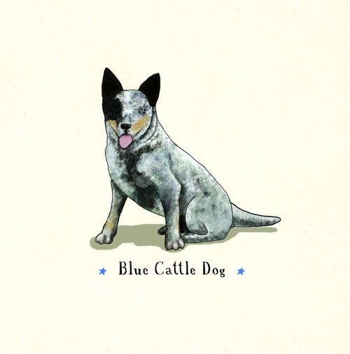 Blue Cattle Dog [SQUARE CARD]