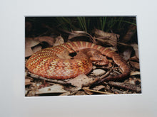 Load image into Gallery viewer, Wild Territory Images Print