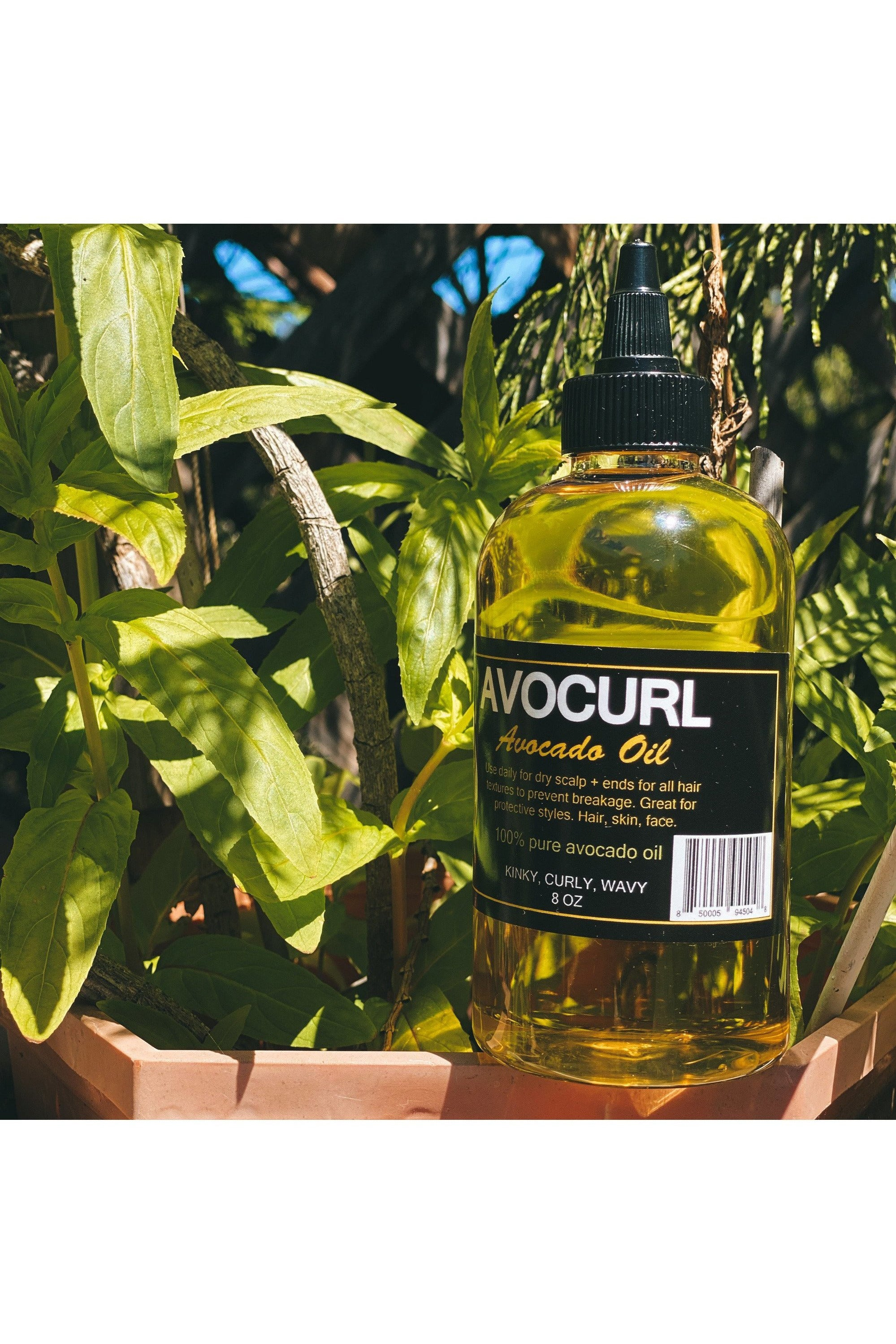 AvoCurl Avocado Oil, 8 oz