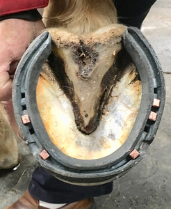 The Shoeing Lab Concave SC Hinds
