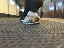 Load image into Gallery viewer, THE SHOEING LAB ELLIPTICAL SHOE HINDS GRADUATED