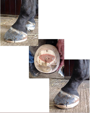 Load image into Gallery viewer, The Shoeing Lab CLog