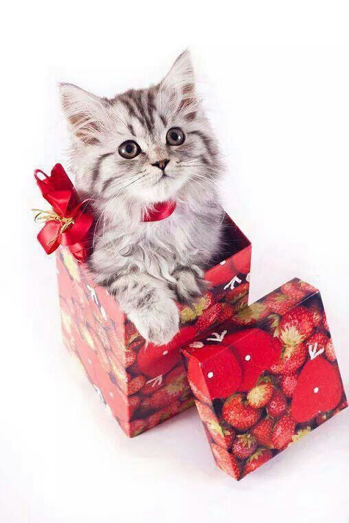 The Top Five Gifts Every Cat Lovers needs