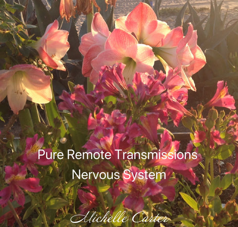 Remote Pure Transmissions - Nervous System & Adrenals