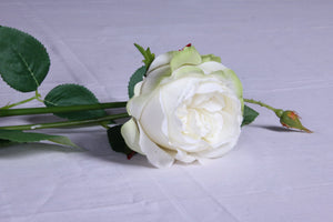Ivory rose with bud flowers