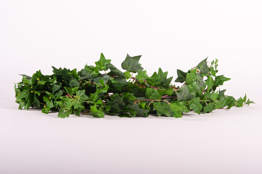 Ivy Trailing Bunch - Fervor + Hue
