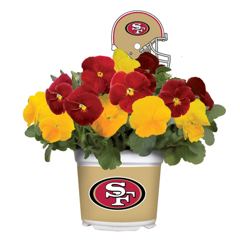 San Francisco 49ers - Pansy Mix