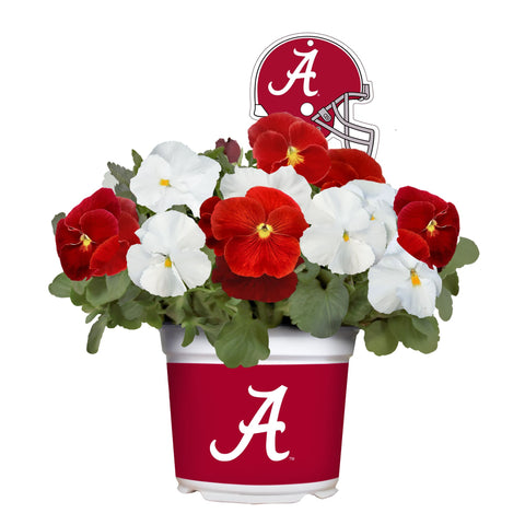 Alabama Crimson Tide - Pansy Mix