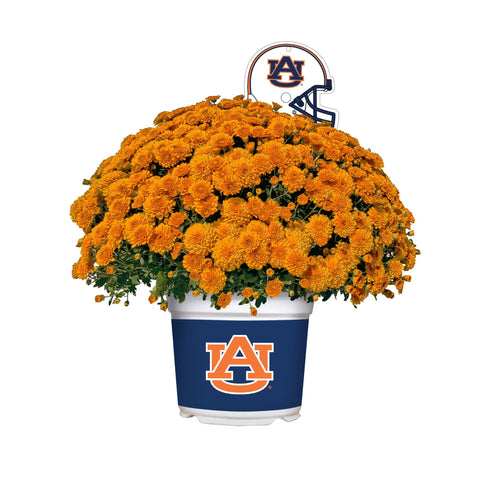 Auburn Tigers - Team Color Mum