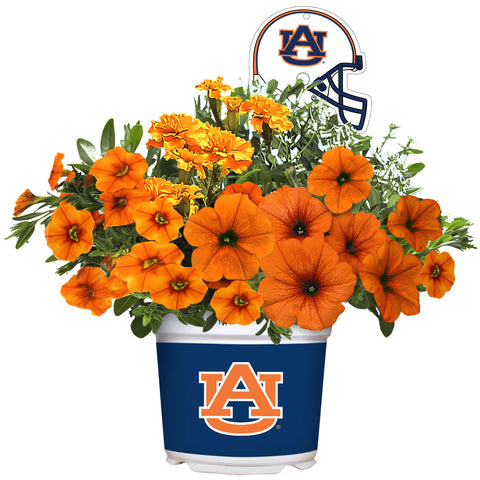 Auburn Tigers - Summer Flower Mix