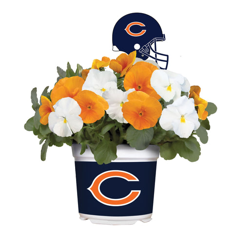 Chicago Bears - Pansy Mix