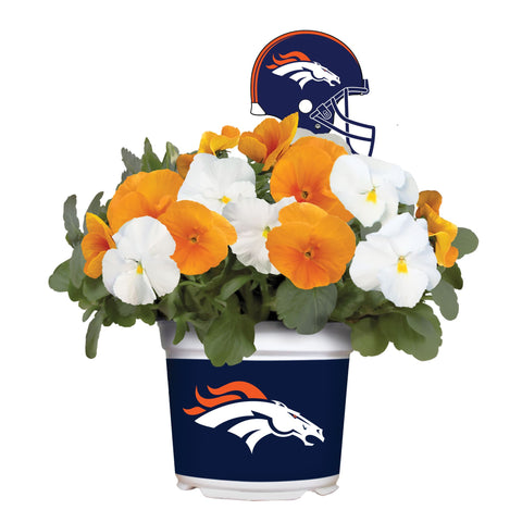 Denver Broncos - Pansy Mix