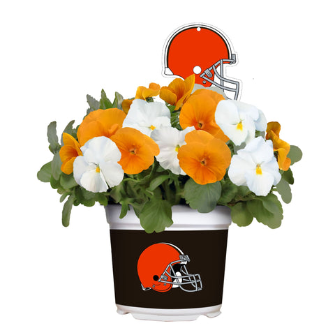 Cleveland Browns - Pansy Mix