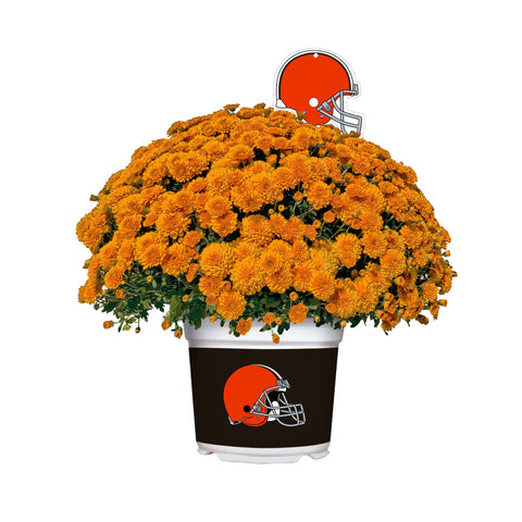 Cleveland Browns - Team Color Mum