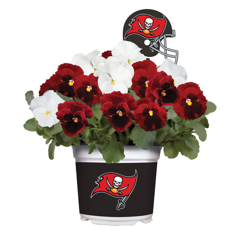 Tampa Bay Buccaneers - Pansy Mix