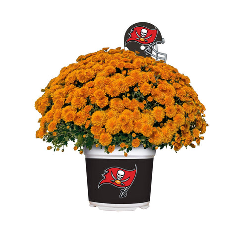 Tampa Bay Buccaneers - Team Color Mum