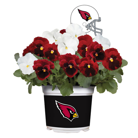 Arizona Cardinals - Pansy Mix