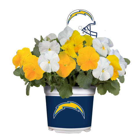 Los Angeles Chargers - Pansy Mix