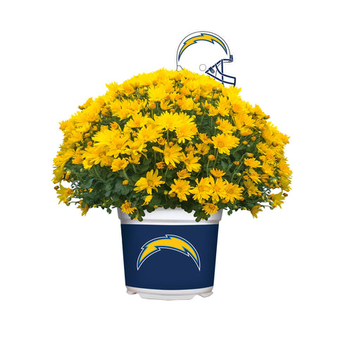 Los Angeles Chargers - Team Color Mum