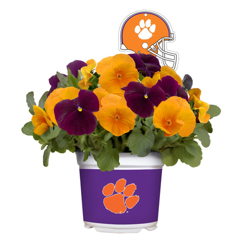 Clemson Tigers - Pansy Mix