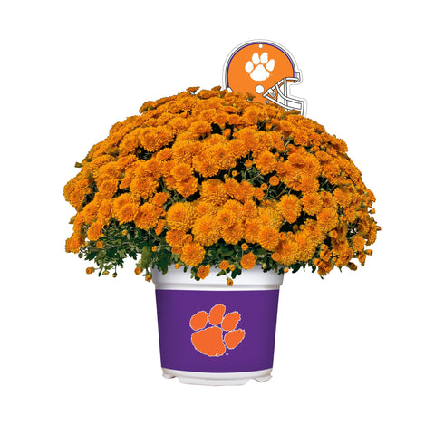 Clemson Tigers - Team Color Mum
