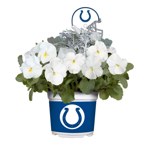 Indianapolis Colts - Pansy Mix