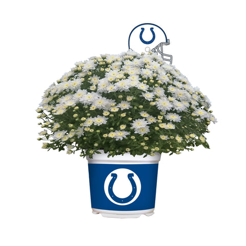 Indianapolis Colts - Team Color Mum