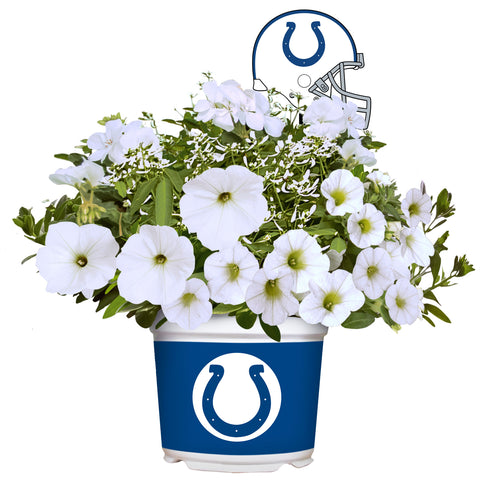 Indianapolis Colts - Summer Flower Mix