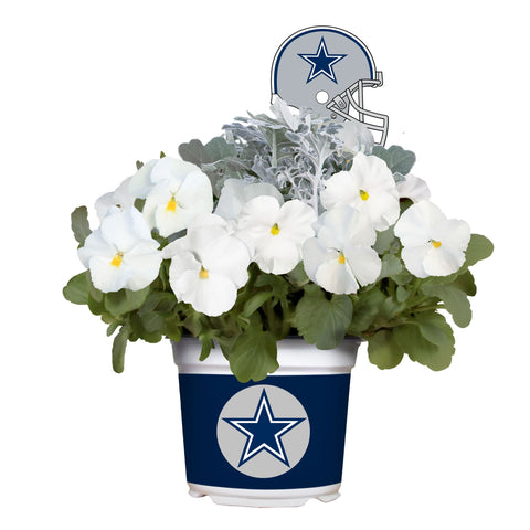 Dallas Cowboys - Pansy Mix