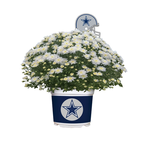 Dallas Cowboys - Team Color Mum