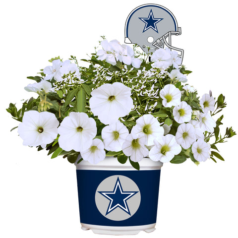 Dallas Cowboys - Summer Color Flower Mix