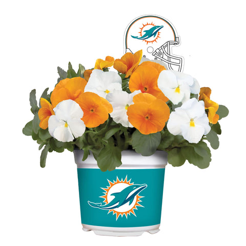 Miami Dolphins - Pansy Mix